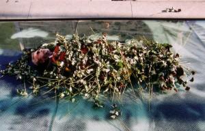 Hungerstreik: Mit Rosen symbolisch Geschichte begraben - Foto: LyrAg
