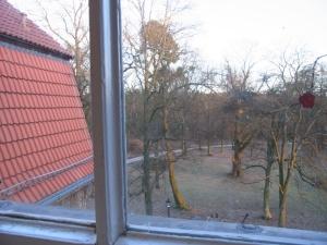 Blick auf den nahe liegenden Wald - Foto: LyrAg
